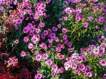 Autumn pattern from flowers and leaves royalty free stock photography