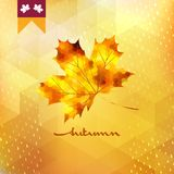 Autumn pattern with leaf. EPS 10 Royalty Free Stock Photos