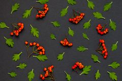 Autumn pattern with  leaves and ashberry on black background.  Royalty Free Stock Images