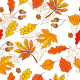 Autumn pattern with leaves of different trees Stock Photography