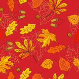 Autumn pattern with leaves of different trees Royalty Free Stock Photography