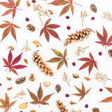 Autumn pattern made of red leaves, dried flowers and pine cones on white background. Flat lay, top view. Royalty Free Stock Photography