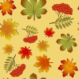 Autumn pattern with maple leaves and Rowan. Autumn pattern with maple leaves, the leaves of chestnut and Rowan. Seamless pattern Royalty Free Stock Photos
