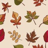 Autumn Pattern Modelo de las hojas de otoño Hojas rojas, amarillas y verdes de los árboles forestales Textura inconsútil Uso como Imagen de archivo libre de regalías