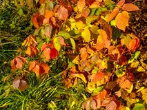 Autumn pattern from multi-colored leaves stock photography