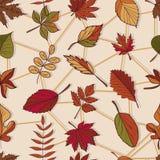 Autumn Pattern Patroon van de herfstbladeren Rode, gele en groene bladeren van bosbomen Naadloze textuur Gebruik als vullingspatr Stock Afbeeldingen