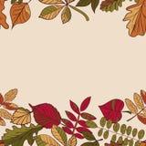 Autumn Pattern Reticolo dei fogli di autunno Rosso, giallo e foglie verdi degli alberi forestali Bordo senza giunte Uso come fond Immagine Stock