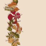 Autumn Pattern Reticolo dei fogli di autunno Rosso, giallo e foglie verdi degli alberi forestali Bordo senza giunte Uso come fond Fotografie Stock Libere da Diritti
