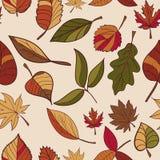 Autumn Pattern Reticolo dei fogli di autunno Rosso, giallo e foglie verdi degli alberi forestali Struttura senza giunte Uso come  Immagini Stock Libere da Diritti