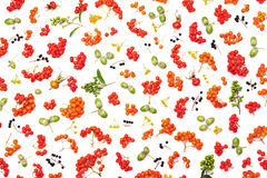 Autumn pattern from rowan, acorns, flowers and various fruits isolated on white background top view. Flat lay styling. Royalty Free Stock Photography