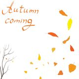 Autumn pattern. On a white background with colorful falling leaves and tree Royalty Free Stock Photo
