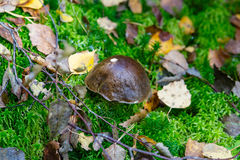 Autumn pattern whith mushrooms Stock Images