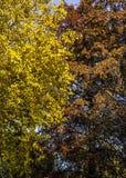 Autumn Patterns Royalty Free Stock Photo