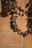 Autumn Patterns | Ivy Climbing On verte un mur de stuc photo stock