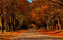Autumn paved road in the yellow leaves. stock image