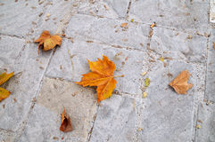 Autumn Pavement 2. Stone pavement with some dead leaves Royalty Free Stock Photos