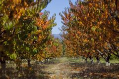 Autumn Peach Garden Royaltyfri Foto
