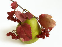 Autumn pear Royalty Free Stock Photos