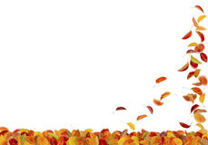 Autumn pear leaves falling Royalty Free Stock Photo