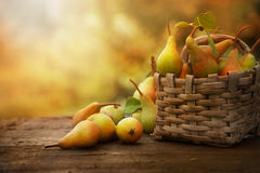 Autumn pears Royalty Free Stock Images