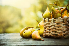 Autumn pears Stock Image