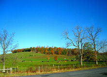 Autumn in Pennsylvania 4 Royalty Free Stock Images