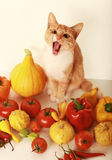 Autumn pet Stock Photo