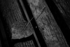 Autumn. Petal on wood background Royalty Free Stock Photos