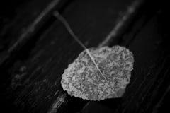 Autumn. Petal on wood background Stock Image