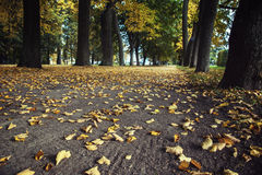 Autumn in Peterhof Stock Image