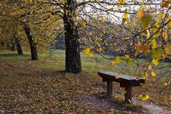 Autumn pew. Pew in the parkland at autumn Stock Photos