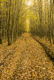 Fallen leaves on a path across the wood Stock Photography