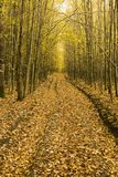 Fallen leaves on a path across the wood Royalty Free Stock Images