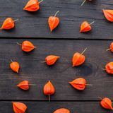 Autumn physalis flowers background composition. Black desk concept royalty free stock photo