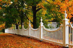 Autumn Picket. A white picket fence displayed against an autumn backdrop royalty free stock photo