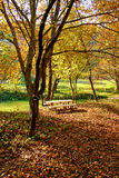 Autumn picnic in the nature. In yellow and orange color tones. Picnic table and two benchs royalty free stock photo