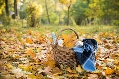 Autumn picnic in park Stock Image