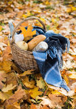 Autumn picnic in park. Basket with a blanket, coffee and food in the yellow autumn leaves. Autumn picnic in the park, a warm autumn day Stock Photography