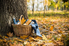 Autumn picnic in park. Basket with a blanket, coffee and food in the yellow autumn leaves. Autumn picnic in the park, a warm autumn day Stock Image