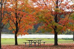 Autumn Picnic Scene. Picnic table between two trees in autumn colors next to a lake Royalty Free Stock Photo