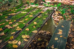 Autumn Picnic Table. An old picnic table with green moss and fallen leaves Royalty Free Stock Images