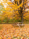 Autumn picnic table in the park. Picnic area during fall season Royalty Free Stock Image