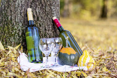 Autumn picnic with wine bottles and glasses -romantic date Stock Photos