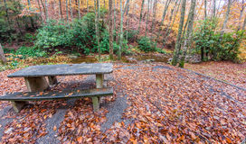 Autumn picnic in the woods Stock Images