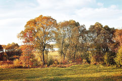 Autumn pictorial landscape with yellowed trees Royalty Free Stock Images