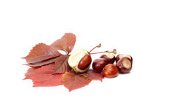 Autumn picture of leaves and chestnuts. Royalty Free Stock Images