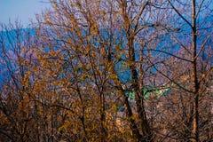 Autumn. This Picture Was captured in Nathia Gali Pakistan stock photo