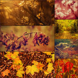 Autumn pictures set Royalty Free Stock Images