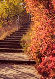 Autumn picturesque landscape with colorful trees stock photography