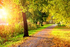 Autumn picturesque landscape. Autumn trees with fallen autumn leaves in sunny weather Royalty Free Stock Photography